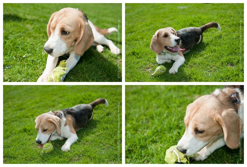 Best Behaviour School for Dogs by Samantha Jones Photography