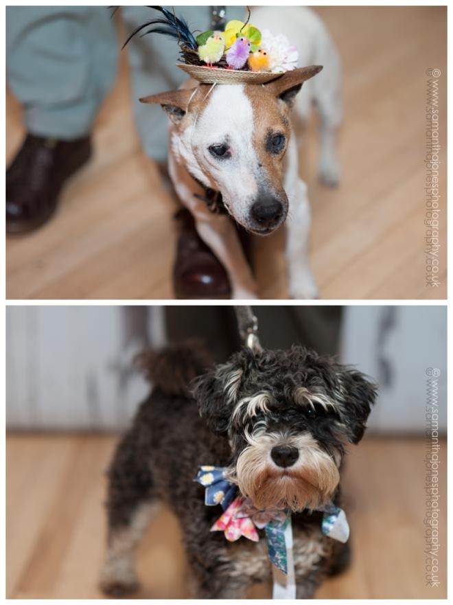 Faversham Hat Festival fabulous dogs by Samantha Jones Photography