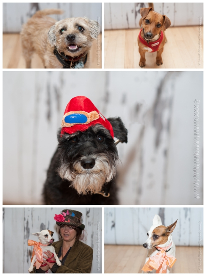The stars of the show - jaunty dogs at the Faversham Hat Festival by Samantha Jones Photography